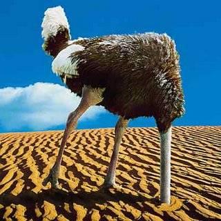 yep-thats-an-ostrich.jpg
